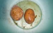 Kinh hoàng khoai tây để hơn 3 tháng trong nước không thối