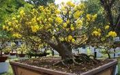 TP HCM: Tổ chức Hội hoa Xuân Giáp Ngọ trong 12 ngày