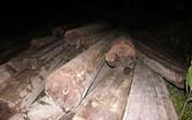 Bắt khối lượng gỗ quý cực lớn
