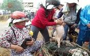 Bế lợn thuê - nghề chỉ có ở Việt Nam?