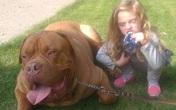Hãi hùng gái 4 tuổi bị chó cưng cắn tới chết