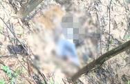 Phát hiện thi thể nam giới trong rừng tràm