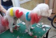 Làm nail, nhuộm lông cho chó giá 500.000 đồng/lần ở Hà Nội