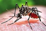 Lo bùng phát dịch sốt xuất huyết tại TP.HCM