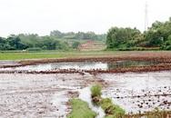 Phú Thọ: Dân khổ vì sống cạnh nhà máy xử lý phế thải