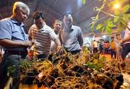 Quảng Nam mở chợ bán sâm Ngọc Linh