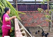 Kiếm bộn tiền nhờ nuôi loài chim để giữ nhà như chó