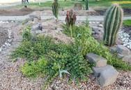 Người chồng tự học làm vườn vì ước nguyện của vợ quá cố