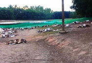 Kinh hãi phát hiện hơn 1.200 con vịt chết như ngả rạ