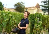Triệu Vy thu hoạch nho trong tư gia rộng 7 ha ở Pháp