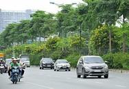 Hà Nội: Ngắm hoa điệp nở vàng rực trên đường Võ Chí Công