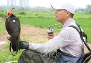 Thú chơi chim ăn thịt đi săn mồi độc đáo ở Hà Nội