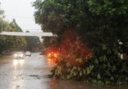 Nghệ An: Xuất hiện mưa đá, lốc xoáy khiến nhiều nhà dân tốc mái