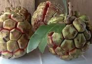 Điểm danh 10 loại na đang có mặt trên thị trường Việt, loại đắt nhất lên tới gần 500 nghìn/kg
