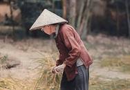 Thâm cung bí sử (221 - 1): Lưng áo nâu của mẹ