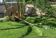 Vườn nhà Thanh Thảo tan hoang vì gió và cháy rừng