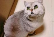 Mèo tự sống 40 ngày, sinh con khi cả nhà chủ nhập viện