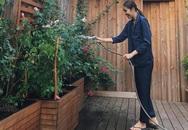 Tăng Thanh Hà thu hoạch trái cây trong vườn nhà