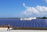 Thủ tướng ra chỉ đạo sau phản ánh của báo chí về cụm dự án điện mặt trời Lộc Ninh