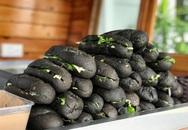 Bánh mì đen như than và những kiểu độc lạ chỉ có ở Việt Nam