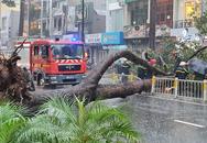 TP.HCM: Cây xanh bất ngờ bật gốc đổ ngang đường trong mưa to gió lớn, đè trúng 1 người đi xe máy