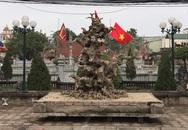 Choáng váng cây sanh 'như khúc củi khô' giá 4 tỷ đồng của đại gia đồng nát Hà Nội