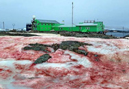 Tuyết đỏ như máu bao phủ quanh trạm nghiên cứu ở Nam cực