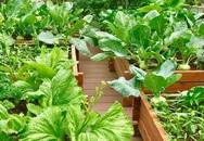 Chuyên gia trong lĩnh vực nhà vườn tại Hà Nội chia sẻ cách trồng rau đúng cách, đảm bảo nhà phố thoải mái rau sạch cho cả gia đình
