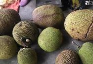 Mùa mít chín cây đến, giá mít cả quả chỉ 25 ngàn đồng/kg, tiểu thương ngày bán cả tạ
