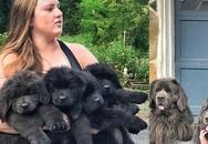 Câu chuyện xúc động phía sau bức ảnh đàn chó nổi tiếng 2 năm trước