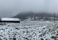 ẢNH: Tuyết phủ trắng, Lào Cai đẹp như trời Âu, người nông dân lại khóc ròng chịu cảnh rau màu bị thiệt hại nặng