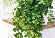 6 loại cây phong thuỷ nên trồng trong phòng ngủ giúp tăng tài vận, vượng khí