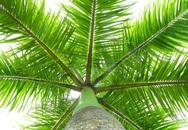 6 loại cây nên trồng trước cửa nhà để hút tiền bạc vào nhà không ngừng