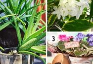 Đi tìm các loại cây tốt nhất cho từng căn phòng trong ngôi nhà của bạn