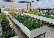 Sân thượng 83m² phủ kín rau quả sạch chỉ sau gần 1 tháng gieo trồng của cô giáo về hưu ở Hà Nội