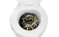 Kinh hãi trăn nấp trong toilet lao ra cắn người
