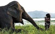 Bé gái Việt Nam luyện voi dữ thành thú cưng lên báo Anh