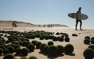 """""""Trứng xanh"""" người ngoài hành tinh bỏ lại trên bờ biển Sydney ?"""
