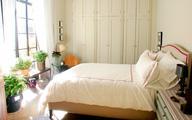 Có nên trồng cây xanh trong phòng ngủ?