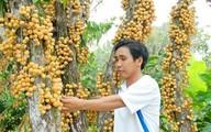 Những hình ảnh cây trái xum xuê vào mùa thu hoạch