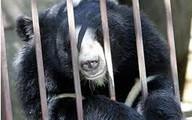Đứa bé và con gấu đều vô tội