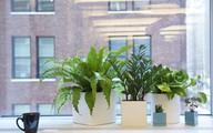 10 mẹo trồng cây tại văn phòng không thể bỏ qua