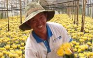 Thu hơn 1 tỷ đồng mỗi năm nhờ trồng hoa cúc kim cương