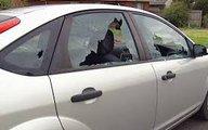 Nhiều xe ô tô bị kẻ gian đập vỡ kính trộm cắp tài sản