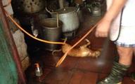 Cận cảnh chế biến thịt chó, vịt dưới nền nhà ẩm ướt