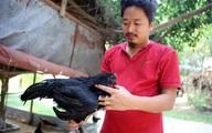 Cận cảnh loại gà mang tên siêu xe đắt khủng khiếp ở Việt Nam
