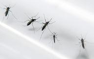 Virus Zika lây qua đường tình dục