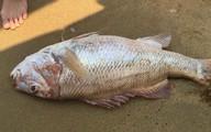 Đến lượt Đà Nẵng có cá chết dạt vào bờ biển