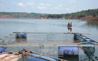 Thị xã Gia Nghĩa, tỉnh Đắk Nông: Ba nguy cơ gây ô nhiễm nguồn nước sinh hoạt