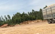 """Bùng phát hàng loạt cơ sở chế biến gỗ dăm không phép tại Thanh Hóa: Bao giờ mới hết cảnh """"bắt cóc bỏ đĩa""""?"""